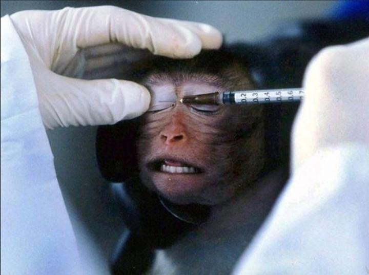Avrupa'daki kozmetik ürünler hayvanlar üzerinde test ediliyor