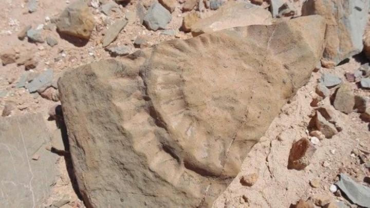 Keşfedilen pterosaur fosili