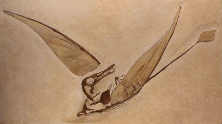 Rhamphorhynchine pterosaur tasviri