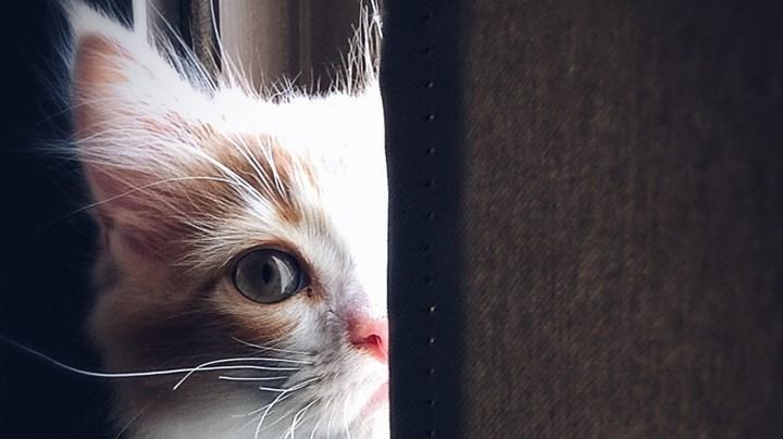 Çin'de Covid testi pozitif çıkan üç kedi öldürüldü