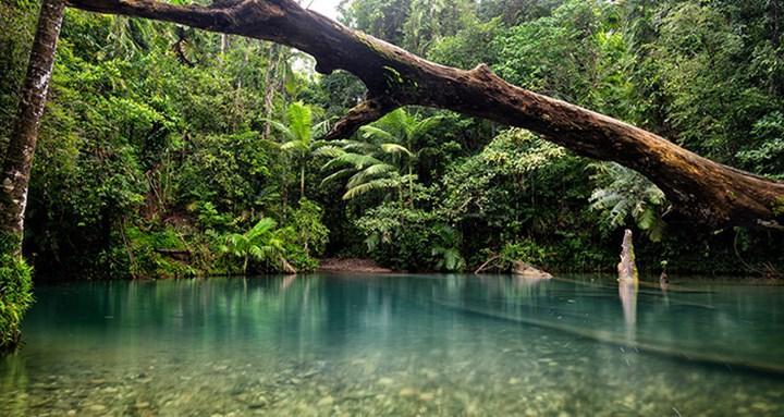 Daintree ormanı