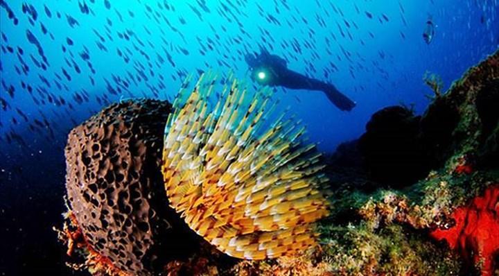 Karadeniz su altı