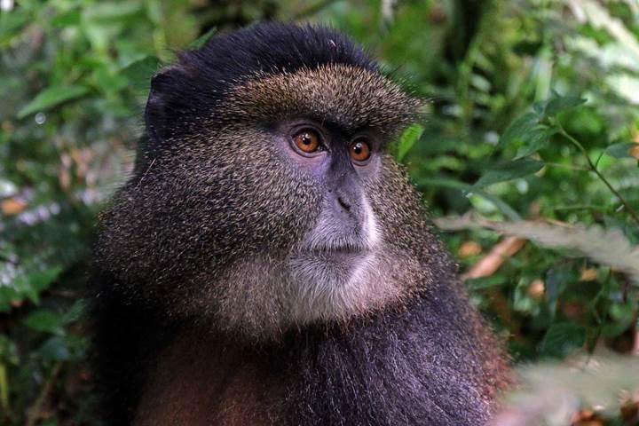 Yüz tanıma teknolojisi ile tehlikede olan türler kurtulabilir