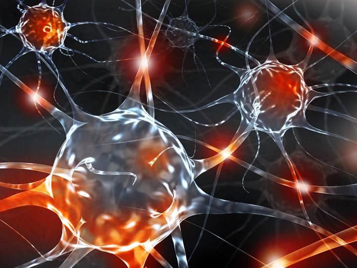 """Beyindeki """"zombi hücreler"""" ile obezite kaynaklı anksiyete arasındaki ilginç bağlantı"""