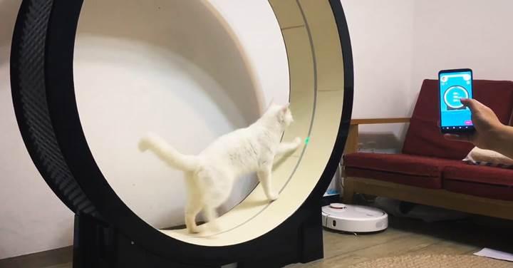 Kediler için akıllı koşu bandı