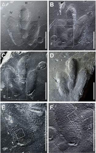 """Bilim insanlarından dinozorlara ait """"parmak izi"""" keşfi"""